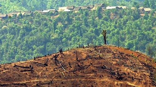 ​The World Lost 45 Million Acres of Tree Cover Last Year, Half of It Tropical
