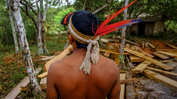 ​​How Native Brazilians Are Using Spy Tech to Stop Illegal Logging in the Amazon