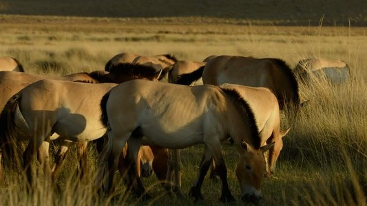 How the Last Wild Horses Can Be Saved by Cheap Gene-Sequencing