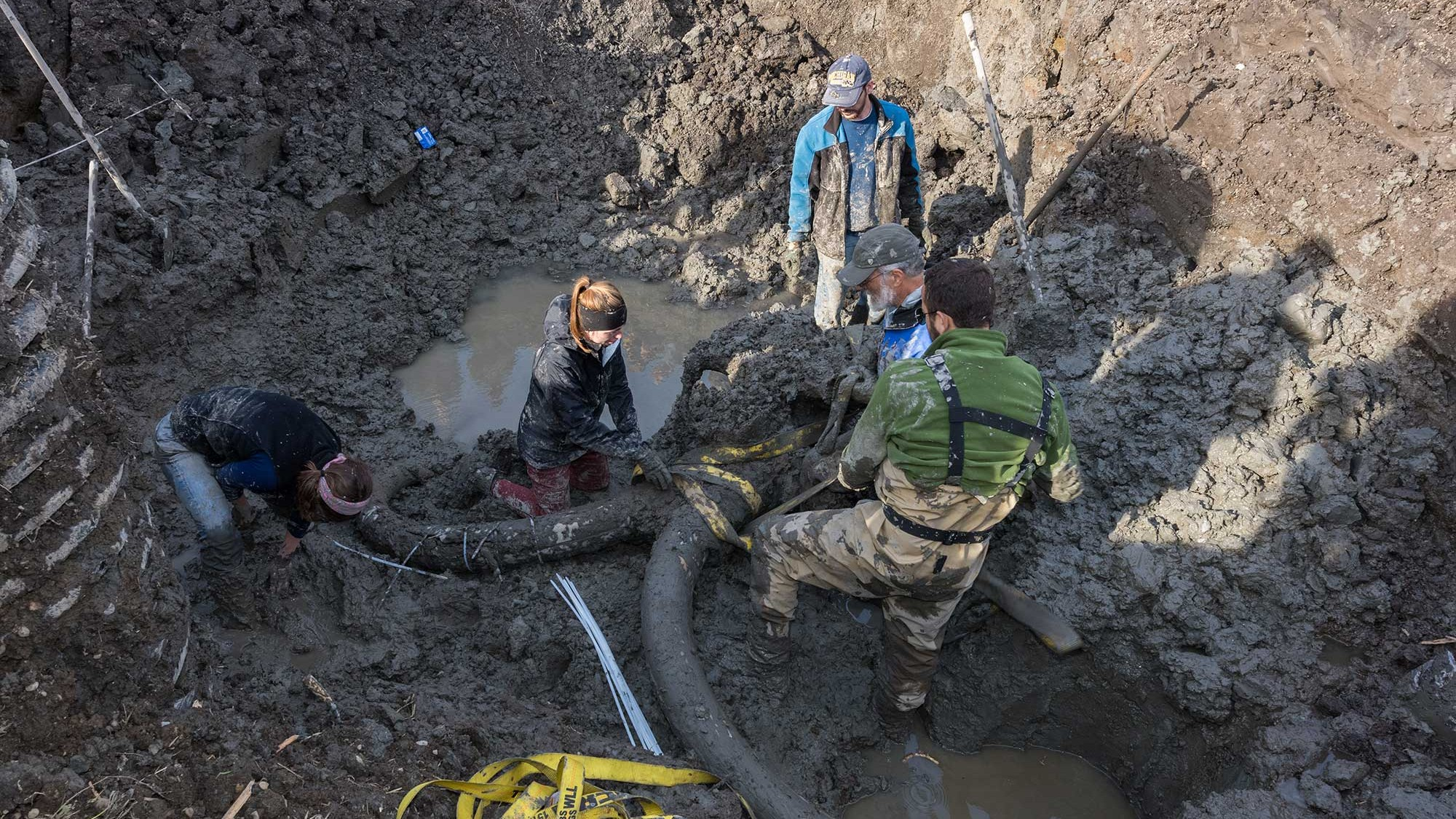 A Michigan Farmer Found a Near-Complete Mammoth Skeleton in His Field