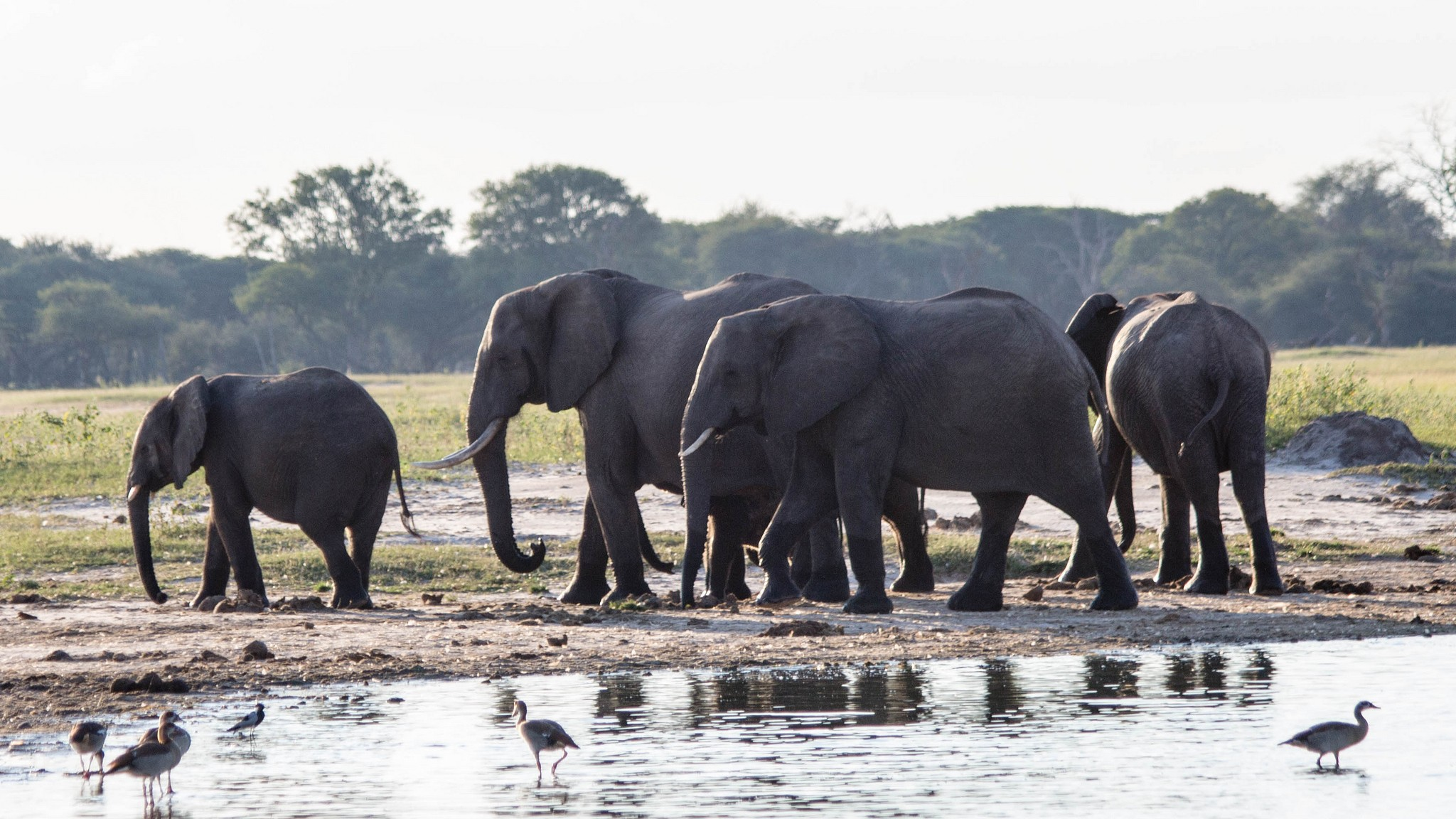 Poachers Are Using Cyanide to Slaughter Entire Elephant Herds