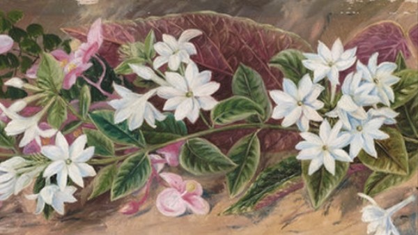 A Tribute to Botanical Artist Marianne North on Her 185th Birthday