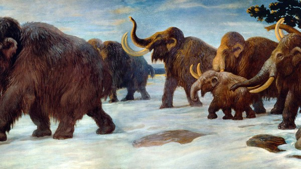 New Evidence Suggests Early Humans Hunted America's Large Mammals to Extinction