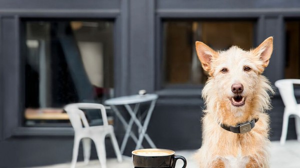 The Simple Wearable Device That Can Help You Keep Tabs on Your Pet