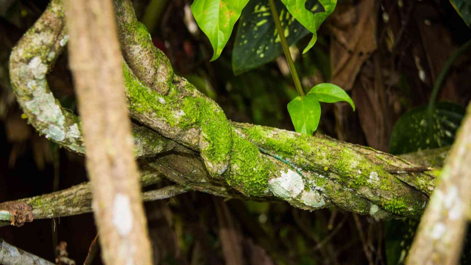Ayahuasca's Medical Power Is Well Known. Now Science Can Back it Up
