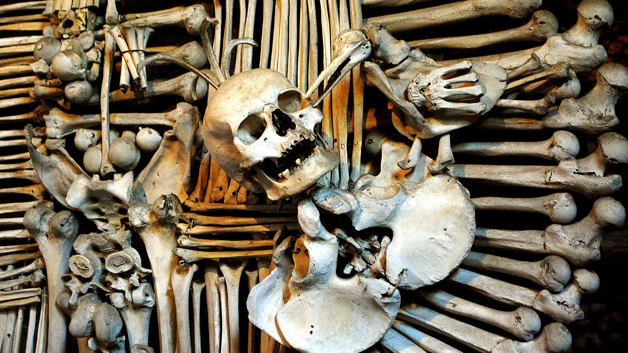 Tumblr Devolves into Literal Witchhunt Over Alleged Bone Thief