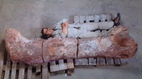 Recently Discovered Titanosaur Is So Huge, It Barely Fits into a Museum
