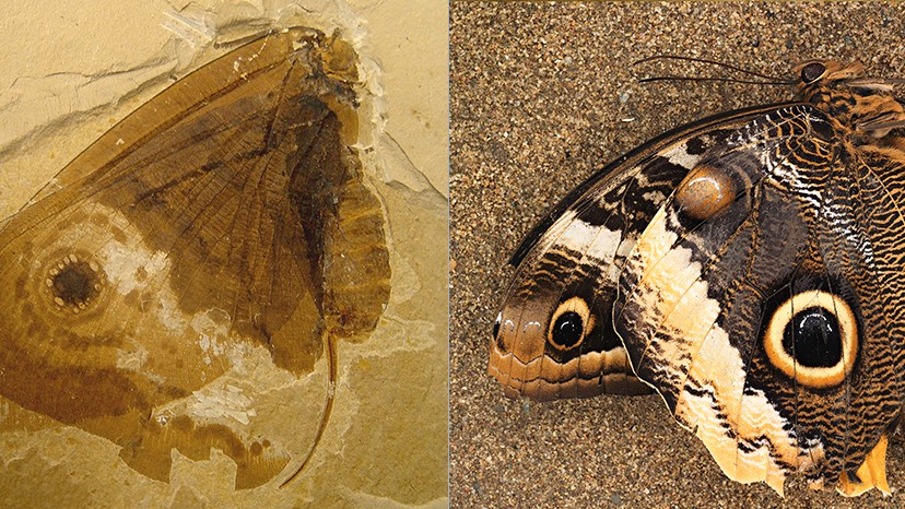 Jurassic Butterfly Look-Alike Shows How Nature Repeats Its Best Ideas