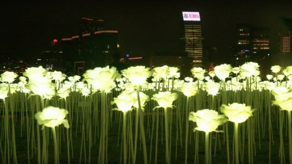 Hong Kong Celebrates Valentine's Day with 25,000 LED Light Roses