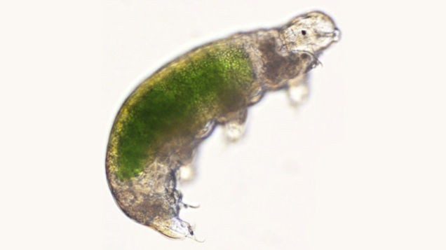 After 30 Years of Cryosleep, Water Bears Wake Up, Stretch, and Have Babies