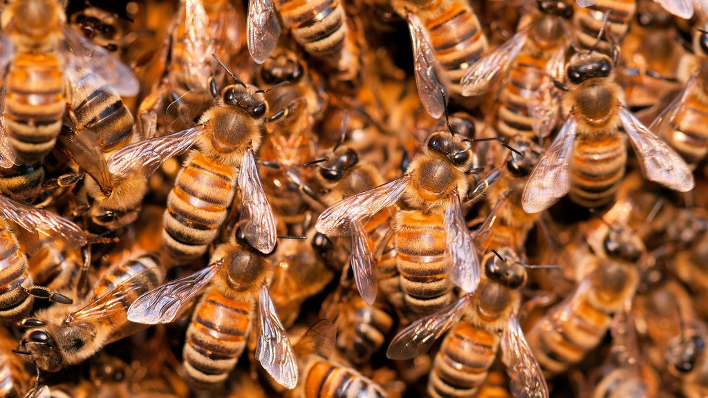 Bee Extinction Is Threatening the World's Food Supply, UN Warns