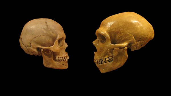 Human-Borne Diseases May Have Contributed to Neanderthal Extinction