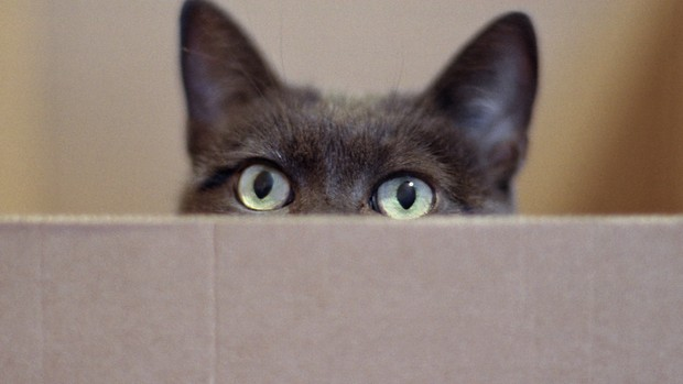 Physicists Put Schrödinger's Cat in Two Death-Boxes at Once