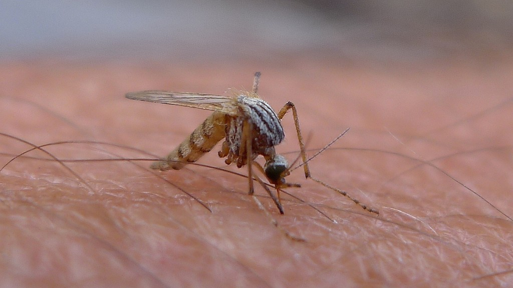 Mosquitoes Have Developed Resistance to Every One of Our Malaria-Fighting Tools