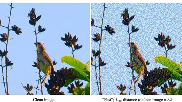 How Cellphone Camera Images Can Fool Machine Vision