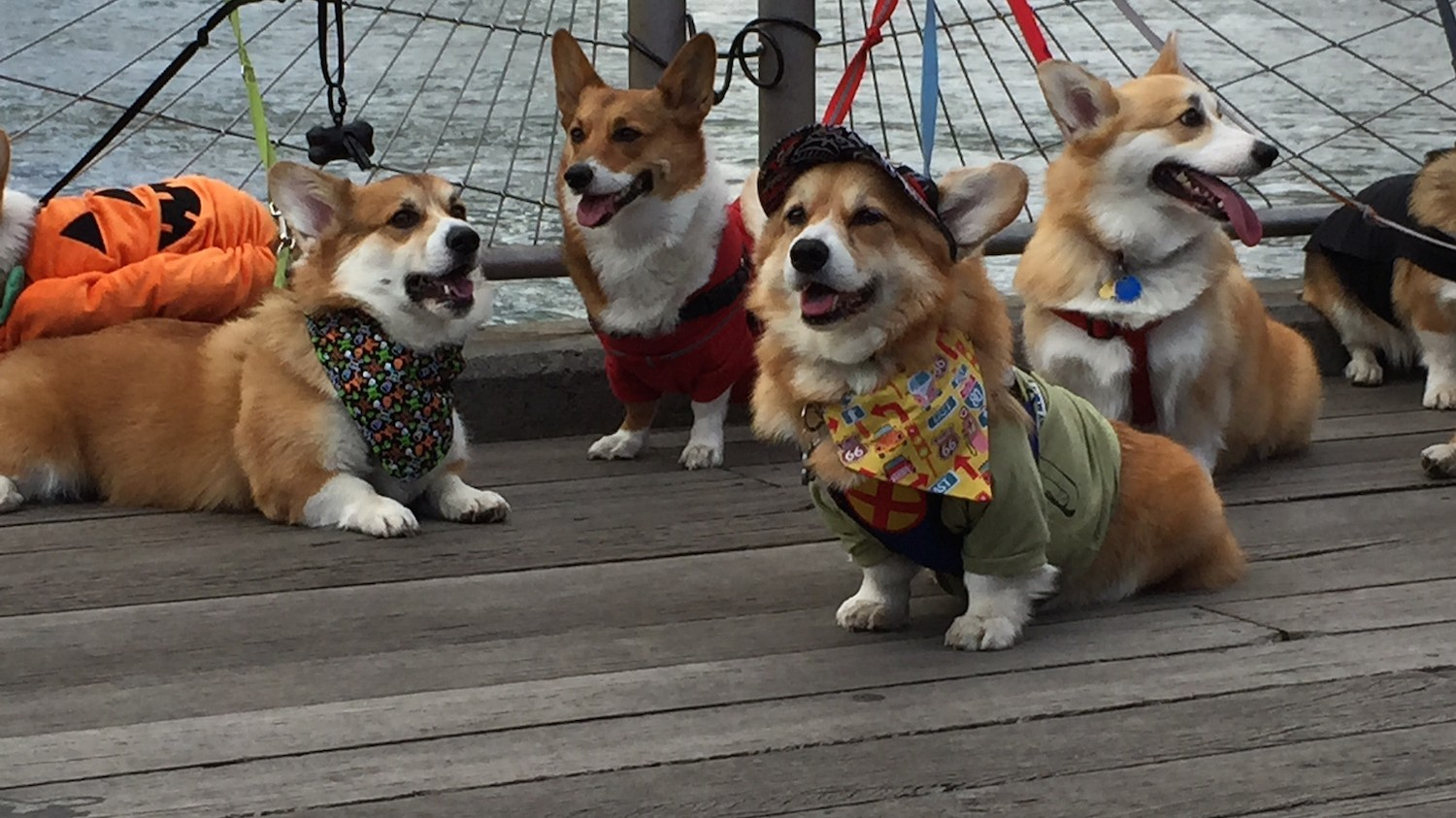 Corgis Are All About Instagram's Snapchat Clone