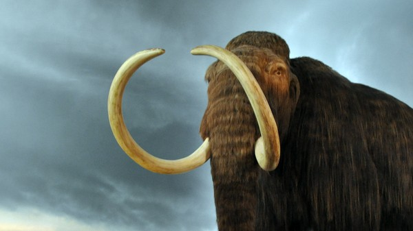 What Woolly Mammoth Extinction Tells Us About Our Rapidly-Changing Future