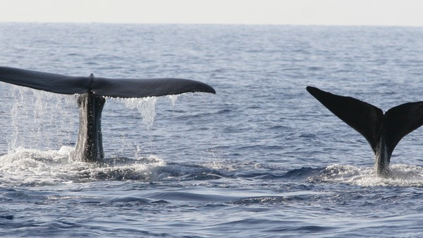 The Surprising Similarities Between Whales and Primates