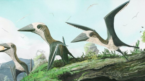 Paleontologists Find a Rare Type of Pterosaur Near Vancouver Island