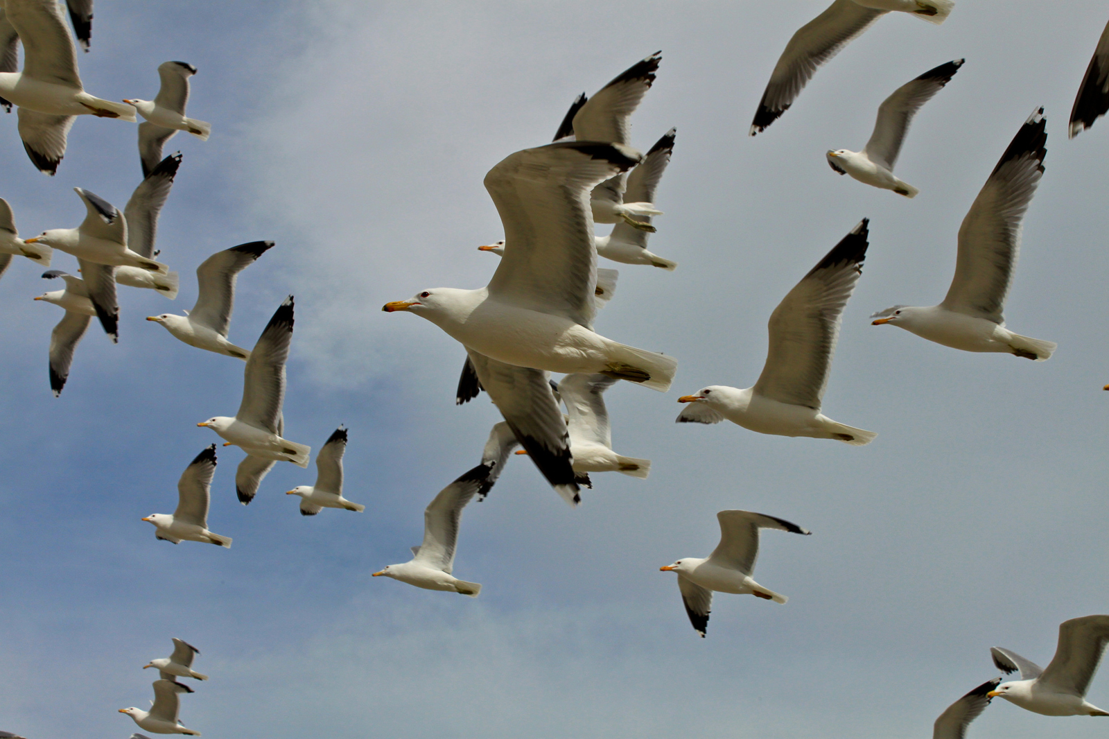 a theory on why birds don u0026 39 t crash into each other