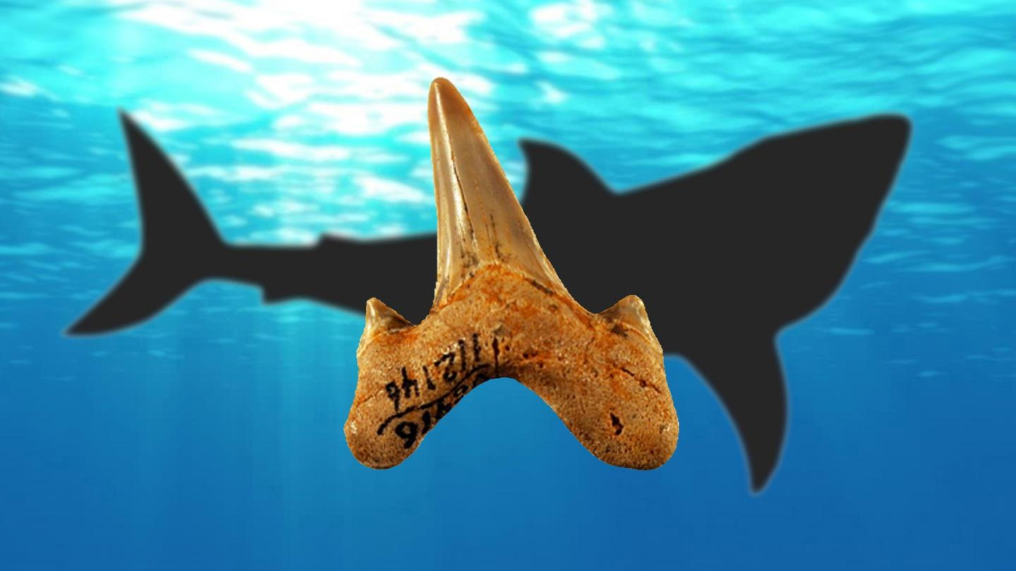 Newly Discovered Prehistoric Shark Species Left Teeth on Three Continents