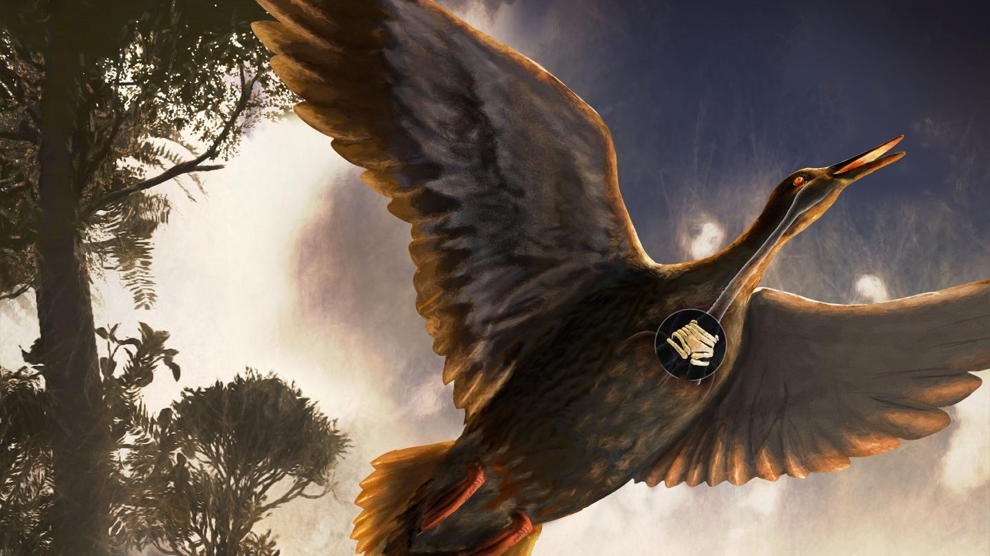 This Ancient Bird Lived with Dinosaurs and Probably Honked Like a Goose