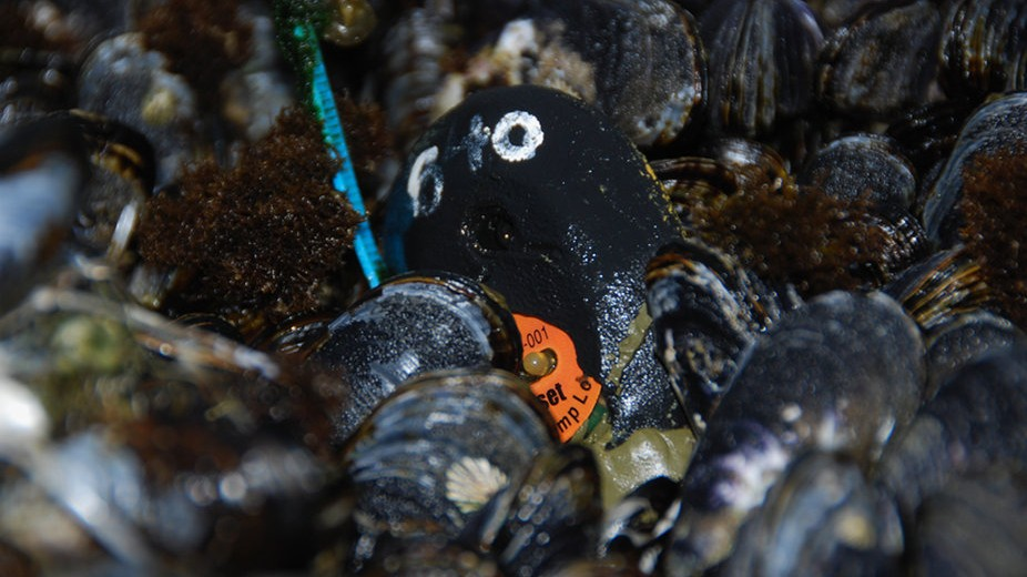 Robotic Mussels Are Here to Help Save the World