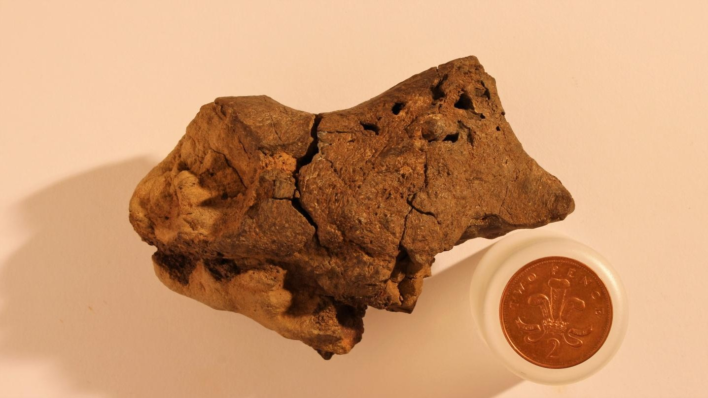 This 'Pickled' Dinosaur Brain Was Miraculously Preserved for 133 Million Years