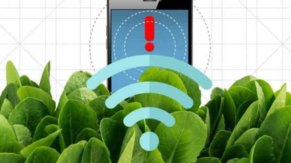 Watch MIT Researchers Train Spinach Leaves to Be Bomb-Detectors
