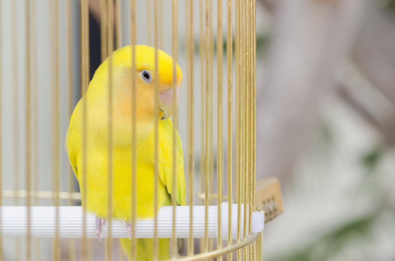 Dark Web Child Porn Sites Are Using Warrant Canaries