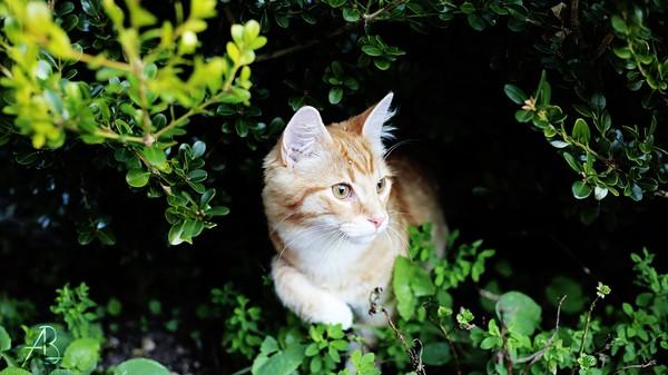Pourquoi les chats viennent ils toujours se coller ceux for Dans jungle terrible jungle le lion est mort ce soir youtube