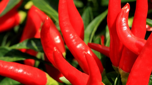 Hot Red Chili Peppers Are Associated With Living Longer, Study Suggests