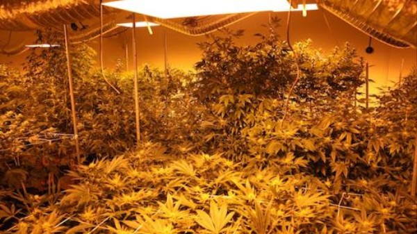 The Dirty Truth Behind Colorado's Legal Weed Growhouses