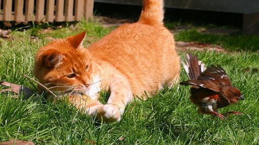 Don't Blame Killer Cats for the Decline in Birds