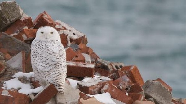 Lasers, Fireworks and Nets: How to Keep Owls Out of Jet Engines