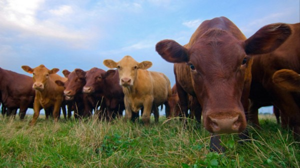 The FDA Has Finally Taken Steps to End Antibiotic Use in Livestock