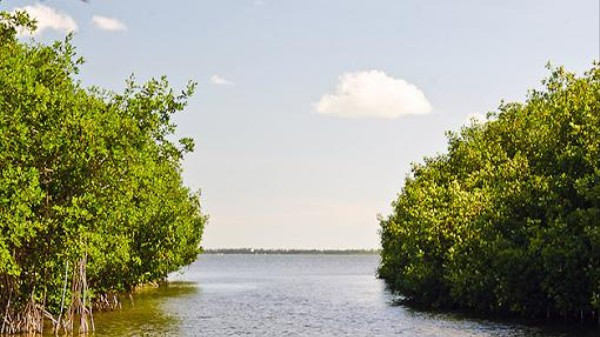 Florida's Mangroves Are Expanding Thanks to Climate Change