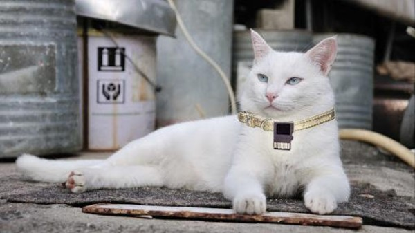 Japan's Alleged Death Threat-Making, Cat-Hacking Programmer Says He's Innocent