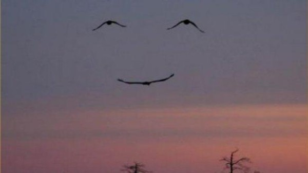 These birds look happy