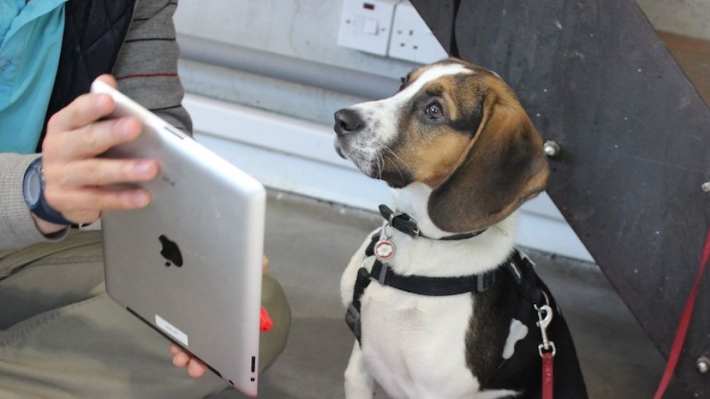 iPads for Dogs Are About More Than Selfies