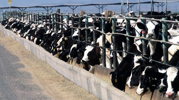 The Latest Push to Prove Ag-Gag Is Unconstitutional