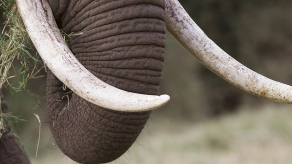 Kenya Is Deploying Drones Nationwide to Drive Out Ivory Poachers