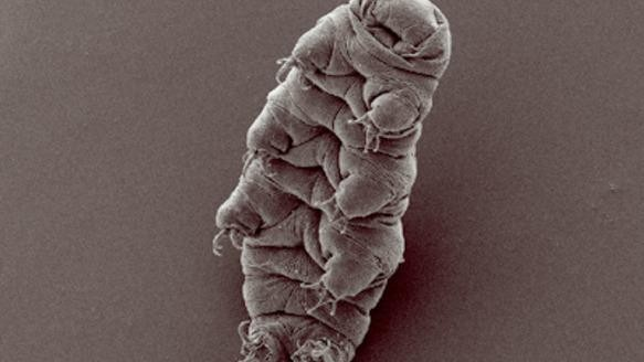 Space Bears' Revenge: Mike Shaw Responds to the Tardigrade Craze