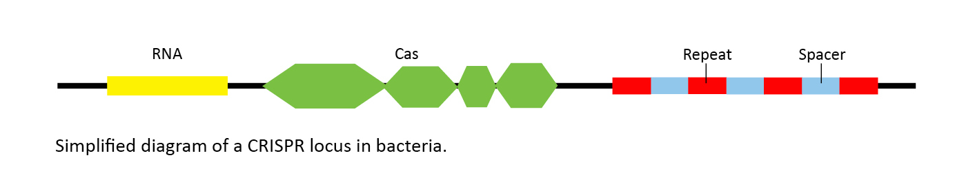 What Is Crispr Cas9 And Why Is It Suddenly Everywhere Manual Guide