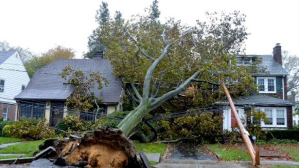 Watch Sandy Calmly Topple This Tree