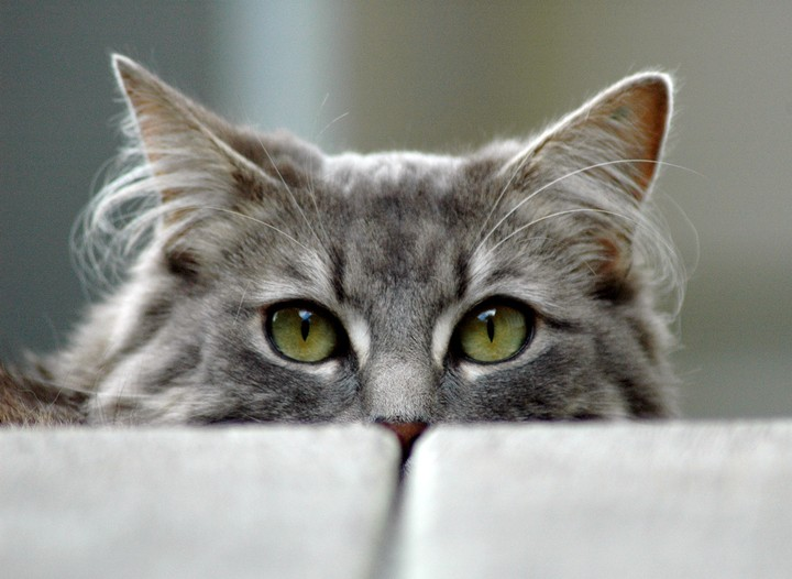 'Cat-gras Syndrome' Is When You Think Your Cat Is an Imposter