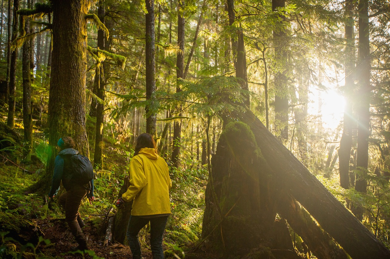 Prehistoric Trees Could 'Future-Proof' Forests Against ...