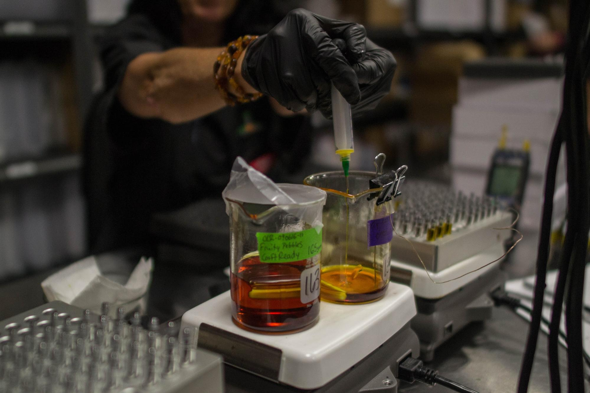 The Making of the Most Potent Weed Oil on the Market - VICE