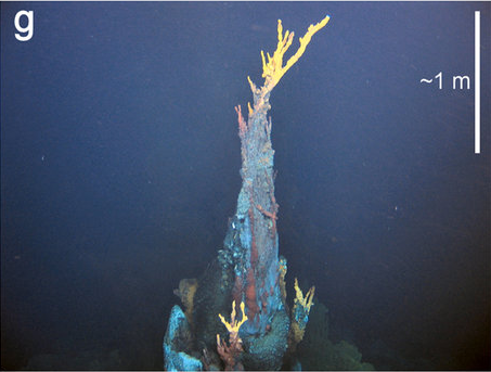 Six New Species Discovered Near Thermal Vents on Ocean Floor