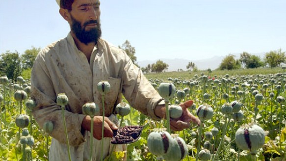 Afghanistan's Opium Poppy Harvest Is Booming